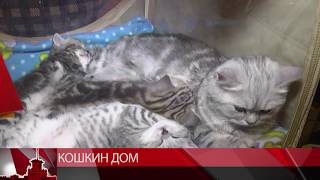 Кошкин дом в Магадане (МТК Видео)