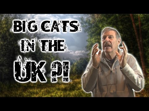 Big Cats Roaming Free in the UK?!