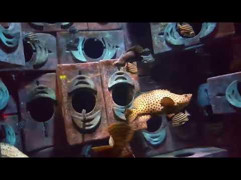 LS! The Lost Chambers Aquarium Dubai (2)