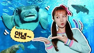 상어가 나타났어요!! 후쿠오카 마린월드 아쿠아리움 동물…