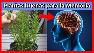 Si usas esta Planta 🌿recuperarás tu memoria al 100% y protegerás tu Cerebro de Alzheimer y de…