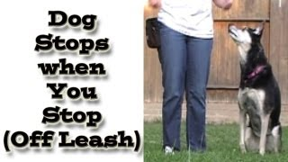 Dog Training: Dog Stops When You Stop (off Leash) - Loose Leash Walking Online Class