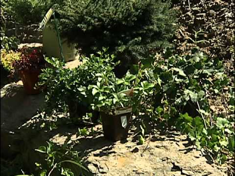 how to put mulch on a slope