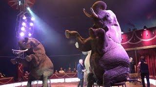 Слон, который порвал зал. Прикол в немецком цирке.