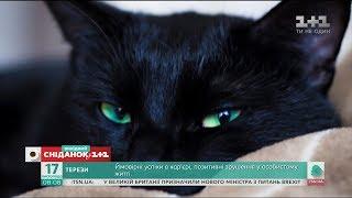 В Італії відзначають День захисту чорних котів