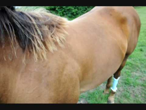 Buy and Sell Horses Trailers and Tack for Free  HorseClicks
