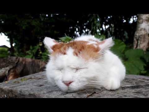 のせ猫 X ばった 171009