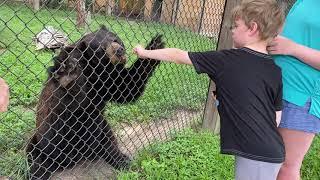 Benjamin feeds a bear honey
