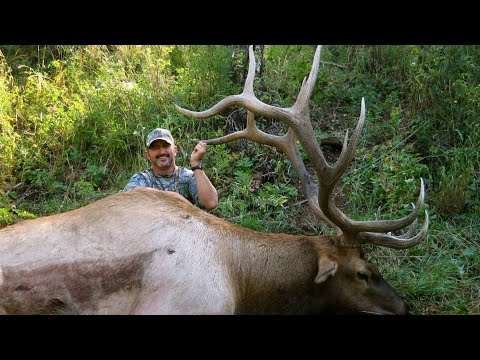 Colorado Muzzleloader Elk Hunt - Tracy Valdez - Bonehead