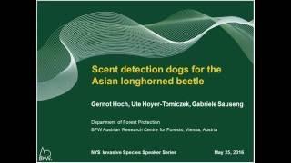 Nys beetle in Asian longhorn