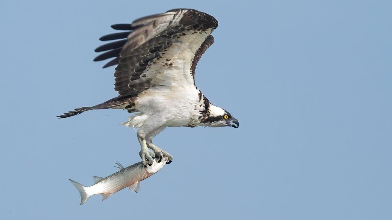 Canon EOS R5 Canon RF 100-500  - First Impressions Bird Wildlife Photography
