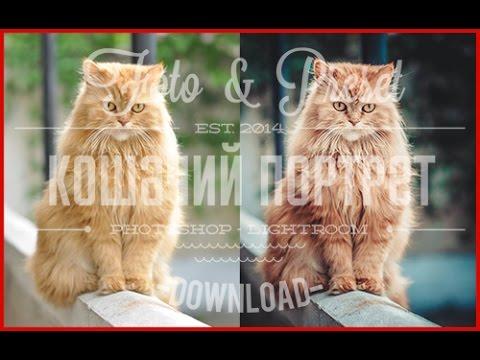 Пресет для lightroom - Обработка фотографии с кошкой RAW