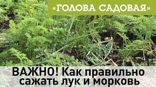 Голова садовая - ВАЖНО! Как правильно сажать лук и морковь