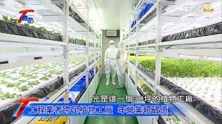 大樓裡種蔬果!科技人跨足植物工廠 種出超夯蔬菜 T觀點 20170423 (2/4)