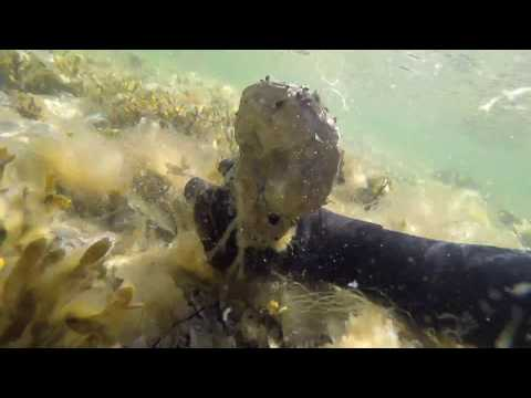 Ancient Reef in the Baltic Sea - Underwater Fossils in Gotland, Sweden