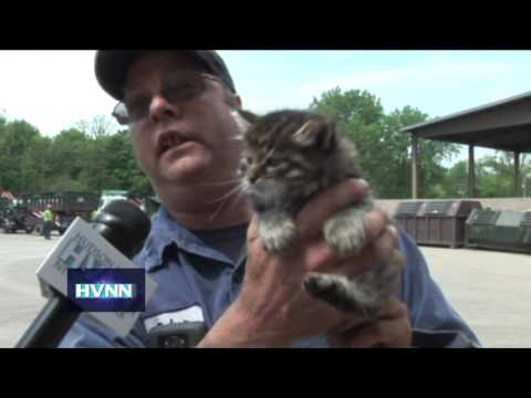 Six kittens rescued from a roll off container at Royal Carting in Hopewell Junction.