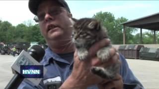 Royal Carting Kittens