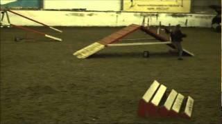 Advanced Dog Agility Training