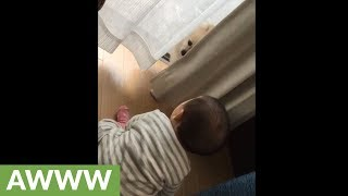 Baby plays adorable game of hide-and-seek with doggy