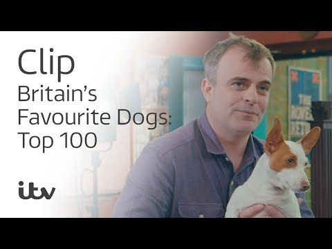 Britain's Favourite Dogs: Top 100  | Simon Gregson and His Jack Russell Cookie | ITV