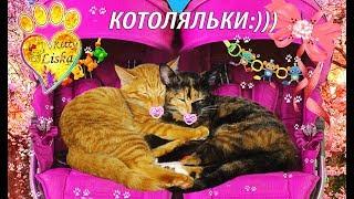 КОТоЛяЛьКИ:))) ПРИКОЛЫ!!! СмЕшнЫЕ КОТЯТА:)))