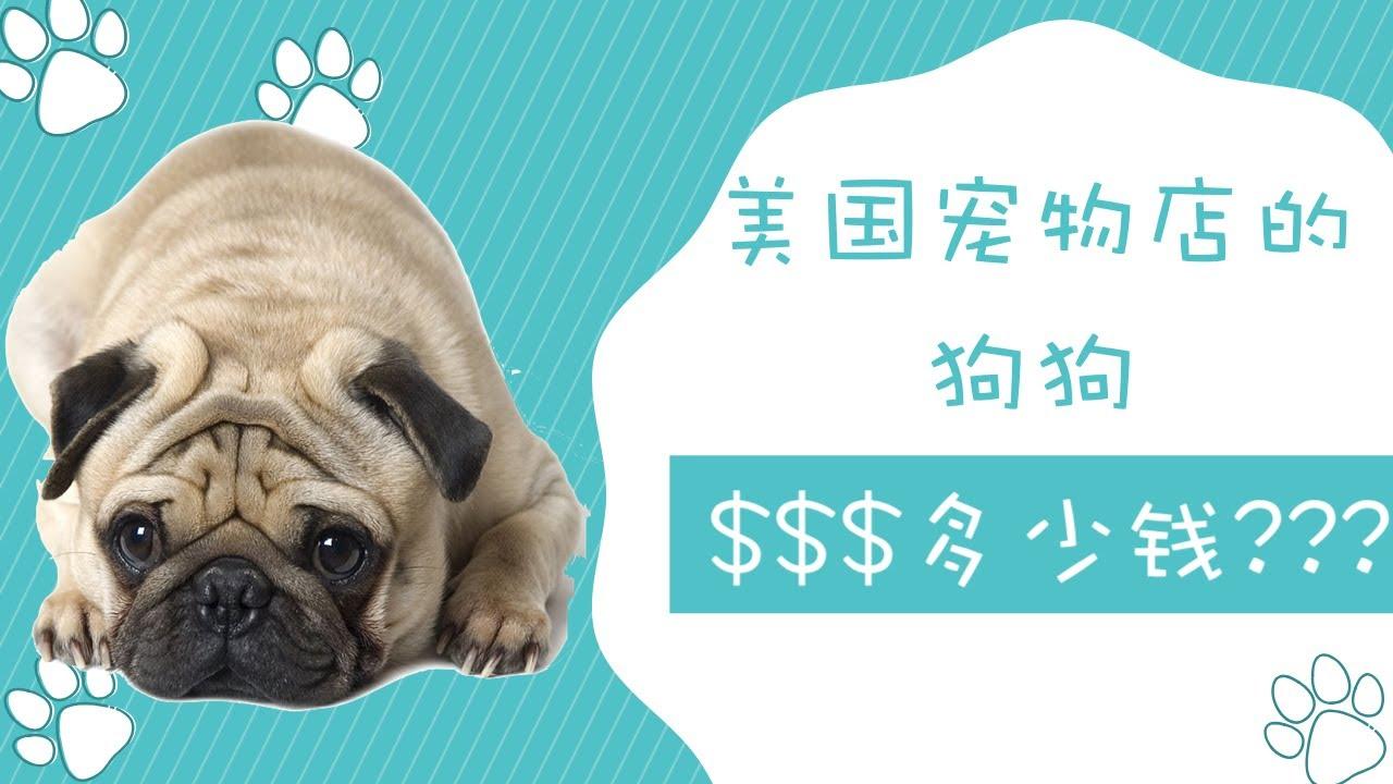 美国宠物店的狗狗卖多少钱?第一弹!
