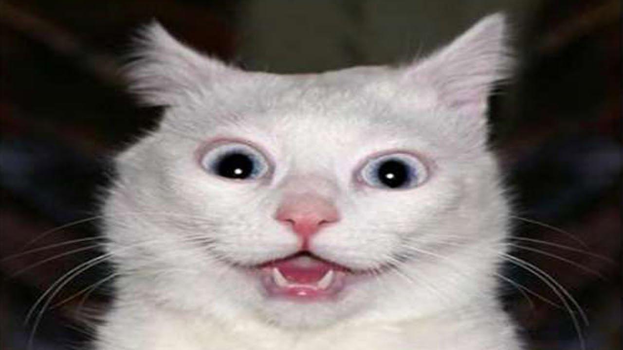 Топ 100 Самых Смешных Видео Про Котов (Супер приколы ...