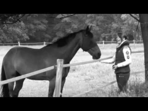 """XAVAS (Xavier Naidoo & Kool Savas) """"Schau nicht mehr zurück"""" (Official HD Video 2012) from YouTube · Duration:  3 minutes 54 seconds"""