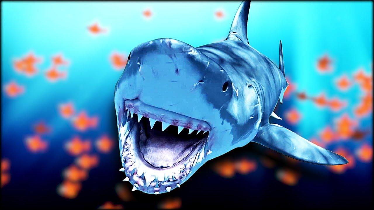 7-ways-to-avoid-a-shark-encounter