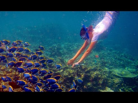 Snorkeling in Maldives - Vacation in Maldives / Underwater Animals
