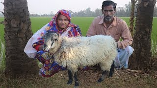 Full Sheep Recipe In Village Style Whole Lamb Cooking | TRADITIONAL SHEEP MEAT CURRY For Orphan Kids