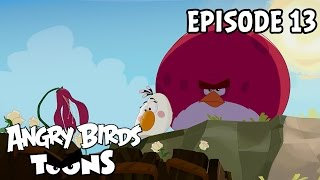 angry-birds-toons-gardening-with-terence-s1-ep13