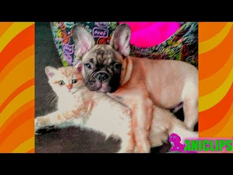 Kittens and Puppies Best Friend Compilation