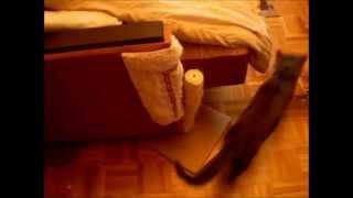 Как отучить кошку точить когти(Видео о том как просто точуть кошку точить когти о мебель и диван., 2014-11-06T10:37:40.000Z)