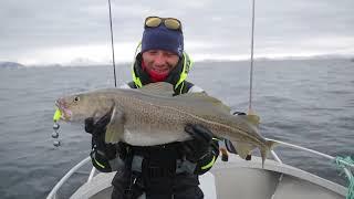 Норвежская рыбалка: СПИННИНГ AYASHI KEGON (2,44 м 7-21 г.) и очень большая треска