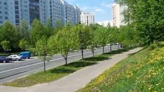 Всё ЦВЕТЁТ! Прямо под моими окнами!!! 12 мая 2013г. Минск. Беларусь!