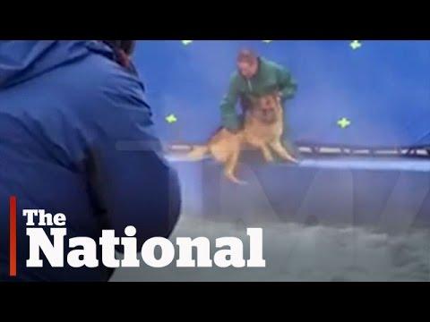 Animal Cruelty On Film Sets