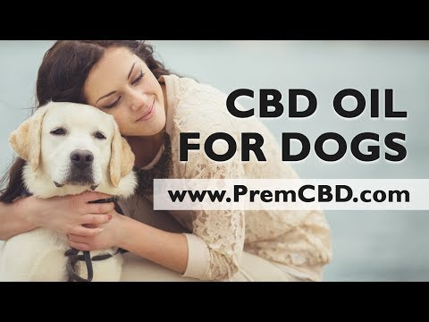 CDB For Dogs With Allergies – Pure CBD Hemp Oil For Dogs