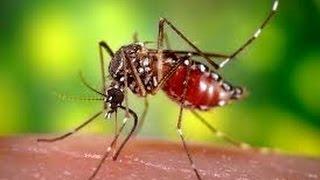Бедный комар попал!!!!!!!!