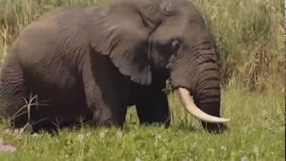 Животный мир Гиганты Африки Зона обитания Видимая мощь Броня и рога Туча пыли Легенды саванны