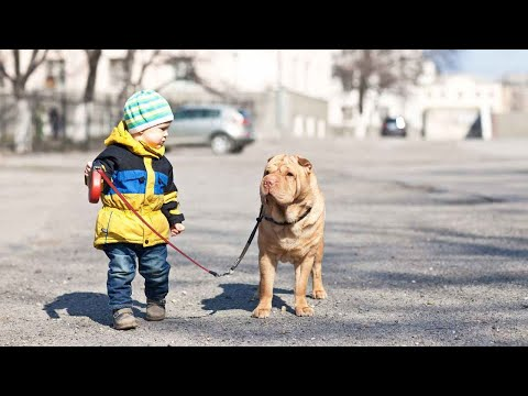 Are Pets Good for a Child with Autism? | Autism