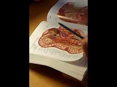 Рак шейки матки. Симптомы и признаки, причины, стадии