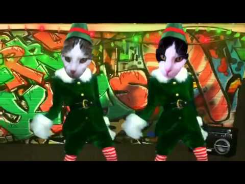 My cat is dancing the christmas dance