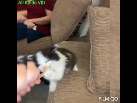 Short funny cat videos /vines 2021