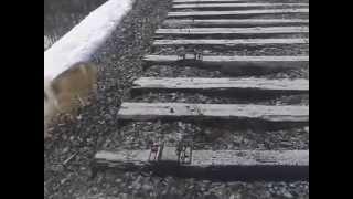 открытие охоты 2014 в мурманской обл(ссылка на видео-http://youtu.be/wGSiwIEWIpA смотрим ставим лайки подписываемся на мой канал. И СМОТРИ БОЛЬШЕ., 2014-05-04T16:20:26.000Z)