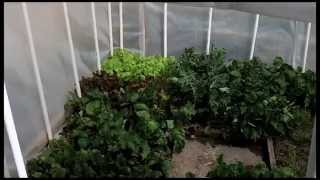A Backyard Greenhouse to Grow Food In Winter