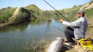 Сырдарьинская рыбалка на мутном канале. Сардоба 2017 г.