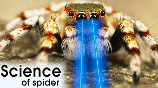 WORLD'S MOST DANGEROUS & GAINT SPIDERS | Science Behind Spiders Explained By HooplaKidz Lab