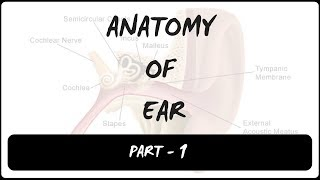 ANATOMY OF EXTERNAL EAR |  PINNA | PART 1 | INSPIRING MINDZ