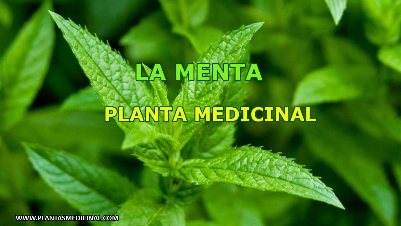 La menta propiedades y beneficios medicinales youtube for Planta decorativa con propiedades medicinales